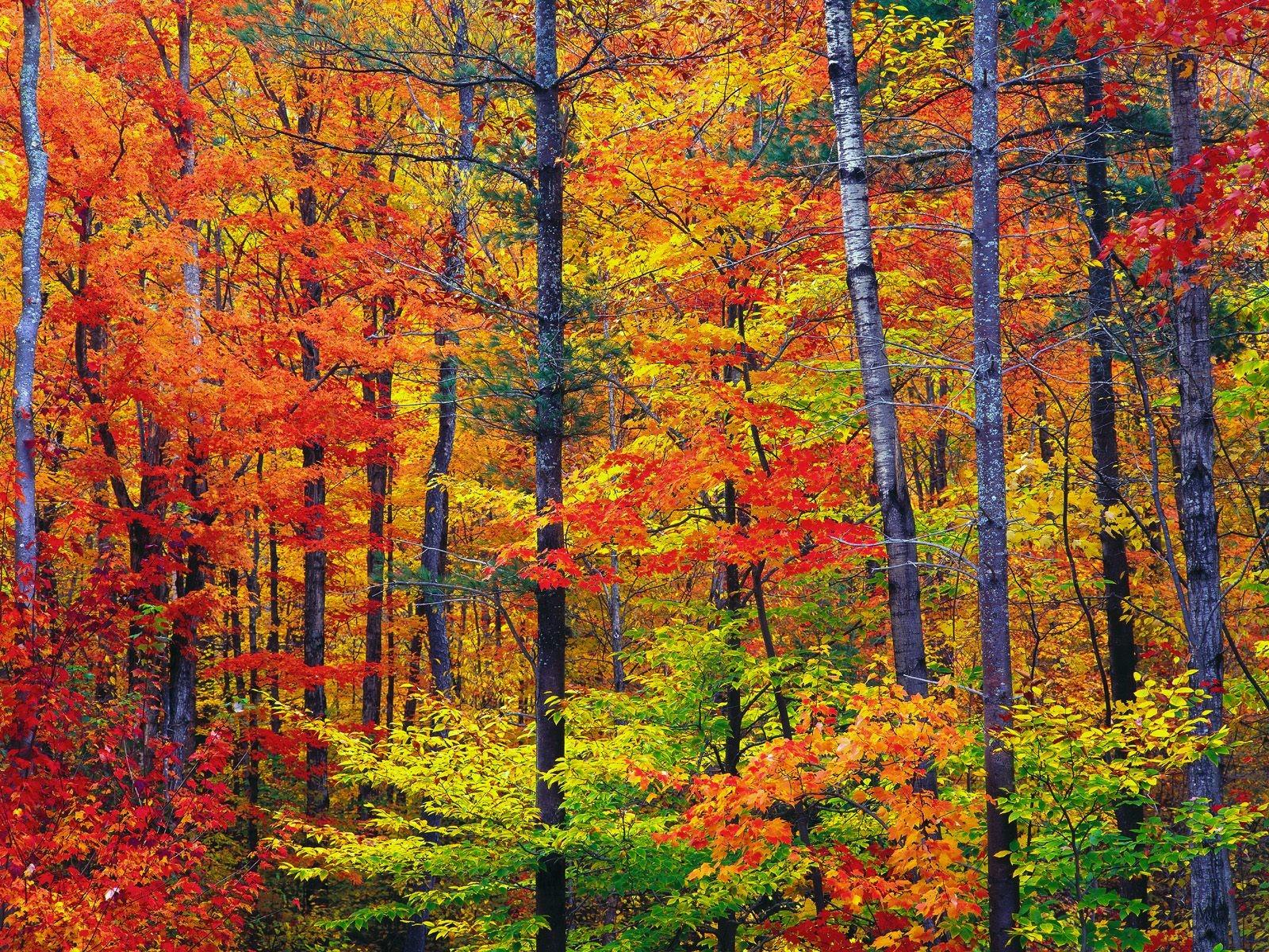 Foliage: le mete più belle in Italia e nel mondo