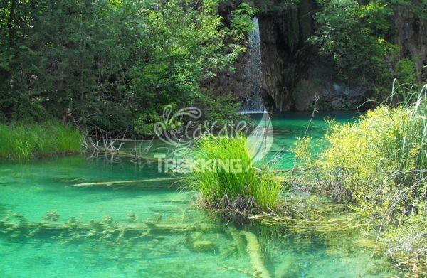Rastovaca Parco Laghi Di Plitvice 4