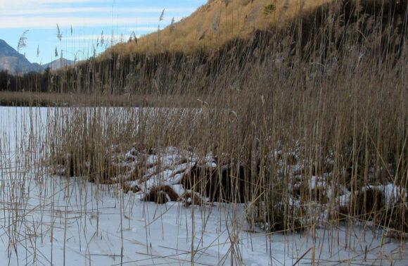 Valganna: Torbiera e Lago di Ganna