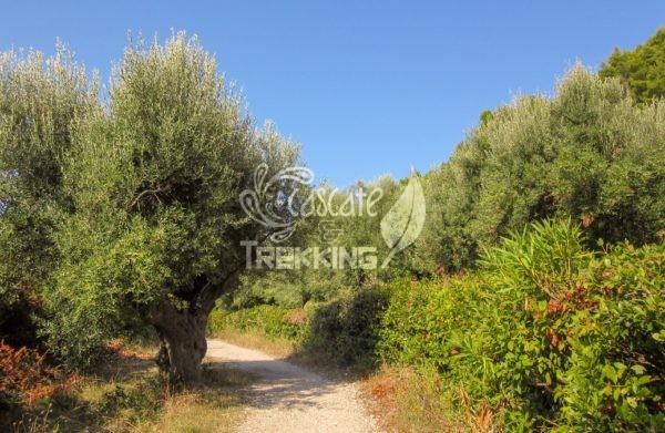 Sirolo Trekking Passo Del Lupo 6