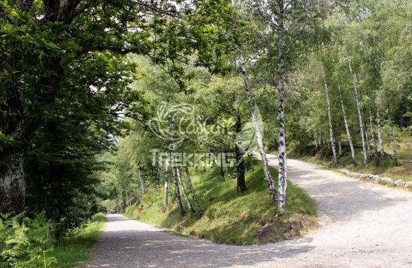 Pollone Trekking Parco Burcina 5