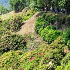 Pollone: Parco Burcina