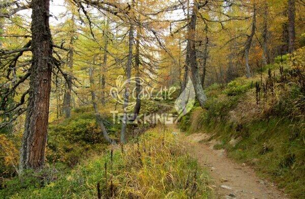 Quinto Trekking Anello Lago Ritom E Cadagno 5